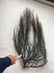 Giant real black coral tree - UBER RARE, EXCLUSIVE (South Surrey), used for sale