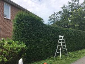 Used, - Hedge Trimming & Tree Pruning Professionals - (Langley, Aldergove, Abbotsford) for sale  Vancouver